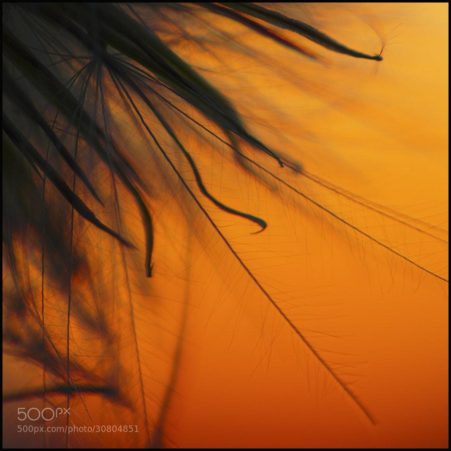 Photograph Orange dream by Zsolt Kiss on 500px