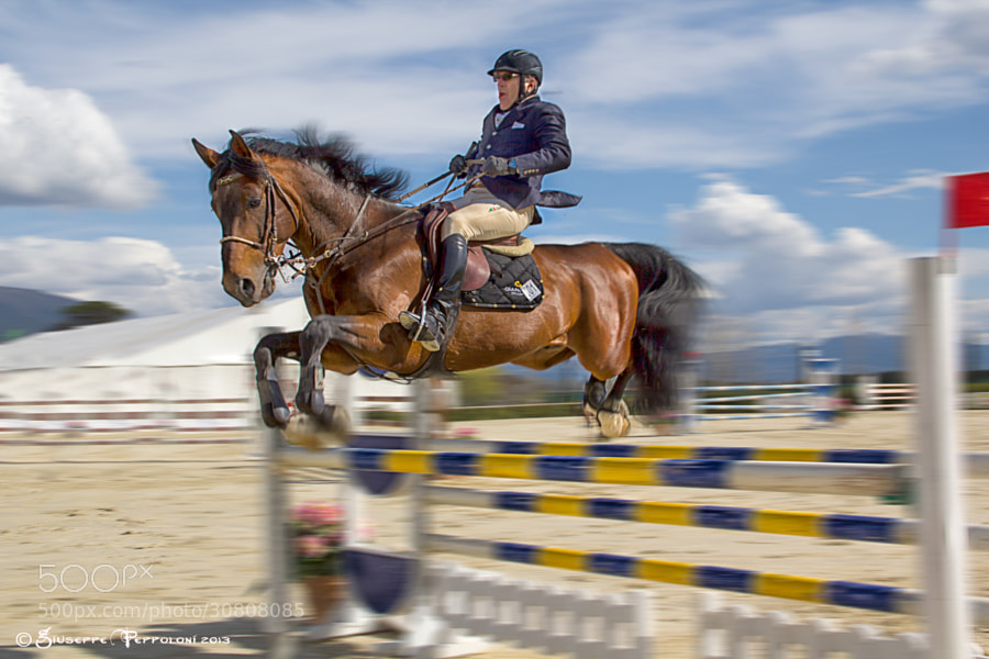 Horse hurdling sport