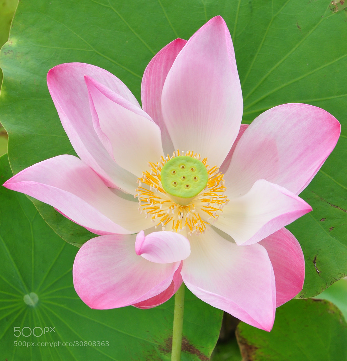 Photograph Beautiful flower by MaxPro  on 500px