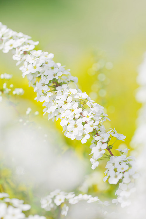 Photograph Feel the spring by AI  OGISO on 500px