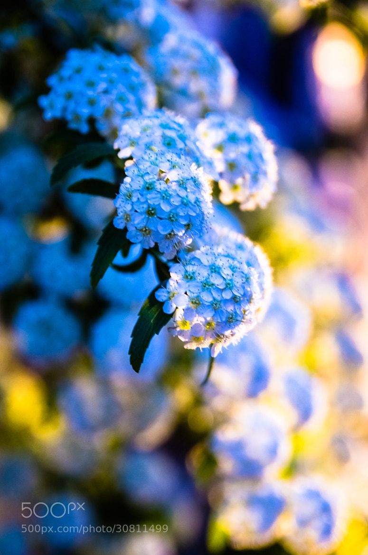 Photograph Night Flower by Sachiko Kawakami on 500px