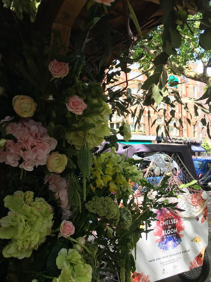 Chelsea In Bloom, London by Sandra  on 500px.com
