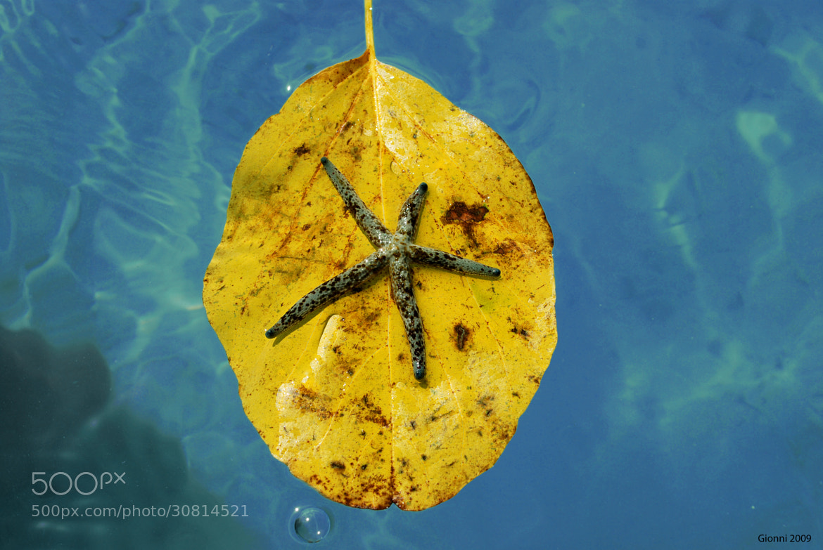 Photograph Starfish in Papeete by Gionni Photos on 500px
