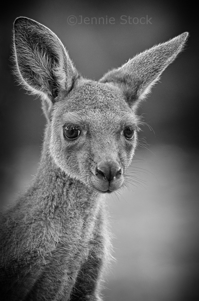 Photograph Joey by Jennie Stock on 500px