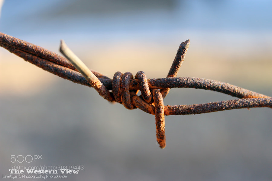 Photograph Rusted Sunny Barbwire by PwDesigns  on 500px