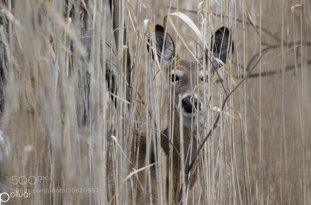 Photograph Got you my deer  by Polluar  on 500px