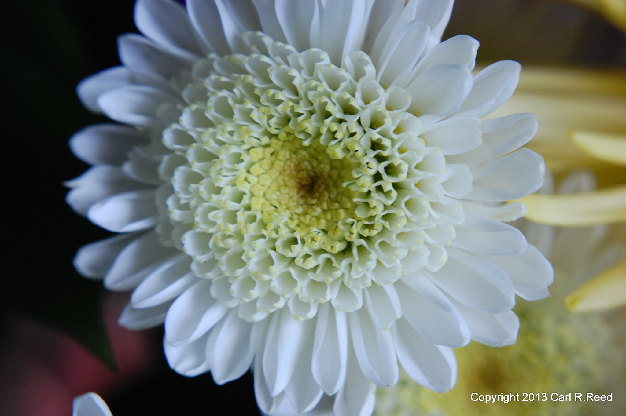 Photograph 4128-white flower by Carl Reed on 500px