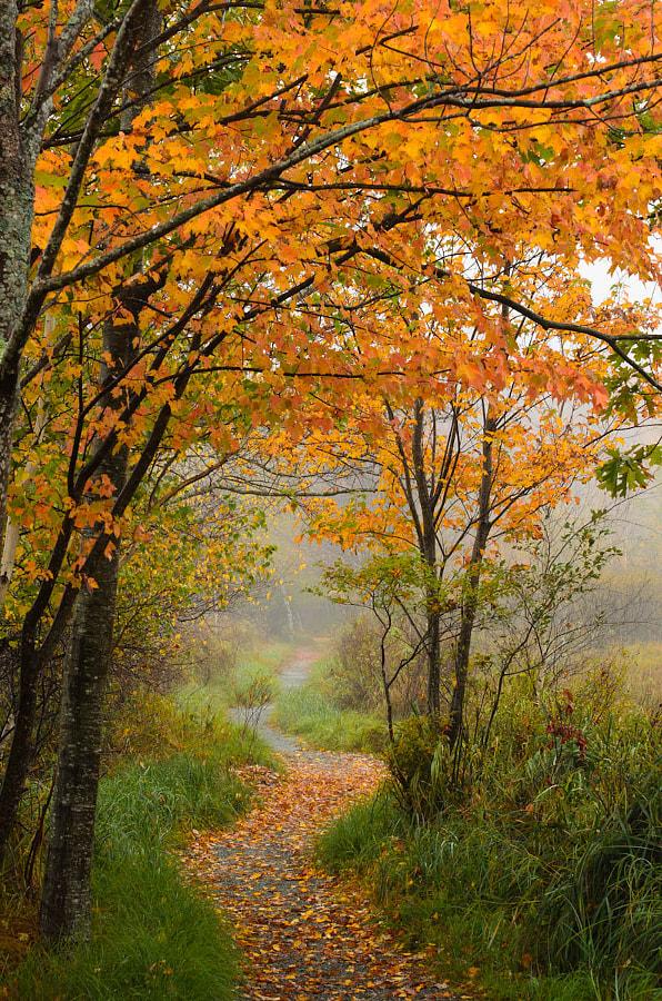 Acadia path