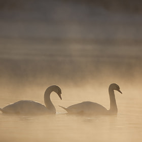 Angels of the Dawn by Peter Cairns (Northshots)) on 500px.com
