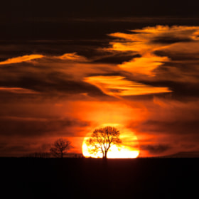 Tree Silhouetted and Framed by the Sunset by Miles Wolstenholme (Miles-Wolstenholme)) on 500px.com