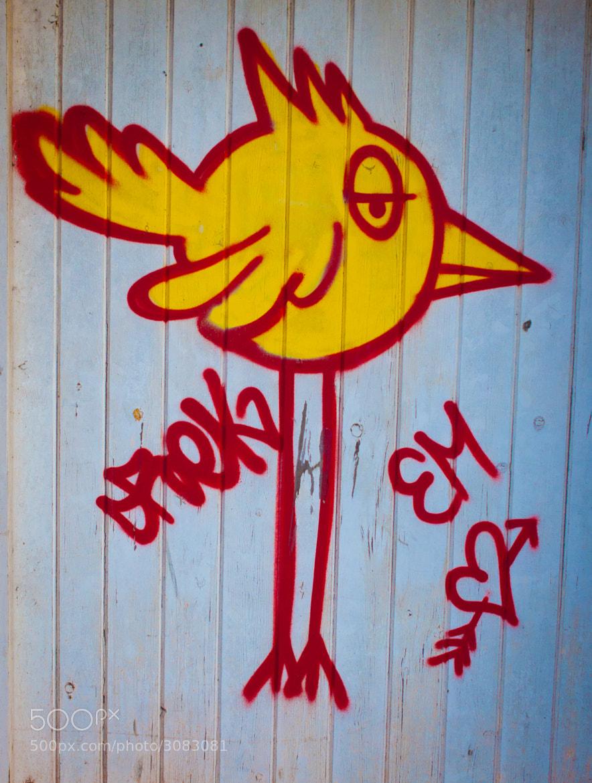 Photograph Em's Love Bird by Neil Bryars on 500px
