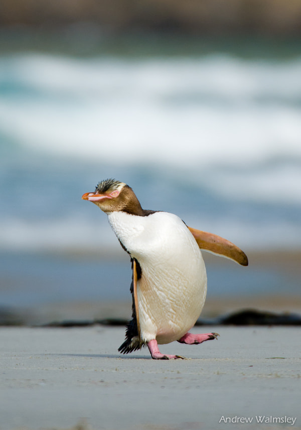 Photograph Happy feet by Andrew Walmsley on 500px