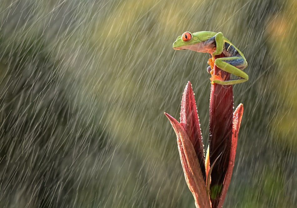 Photograph Rainy day by Andiyan Lutfi on 500px