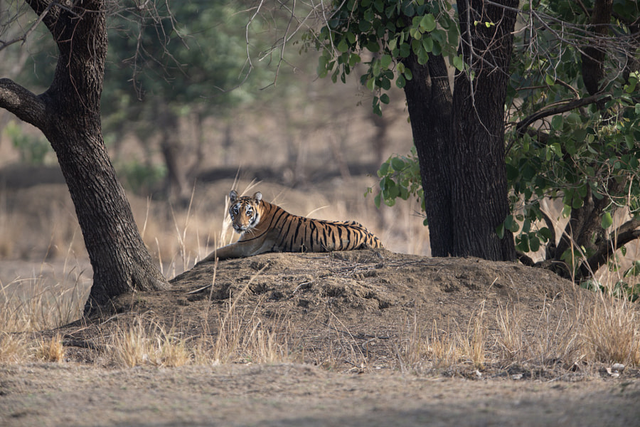 Resting Under The Trees by Mukul Wasnik on 500px.com