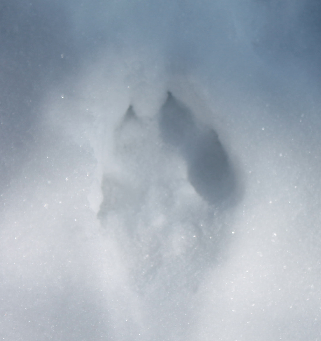 Photograph Paw print by Adelka Molcan on 500px