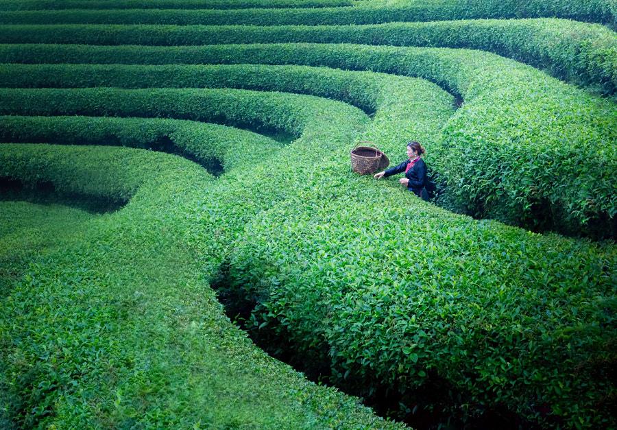 茶道弯弯 by Jon on 500px.com
