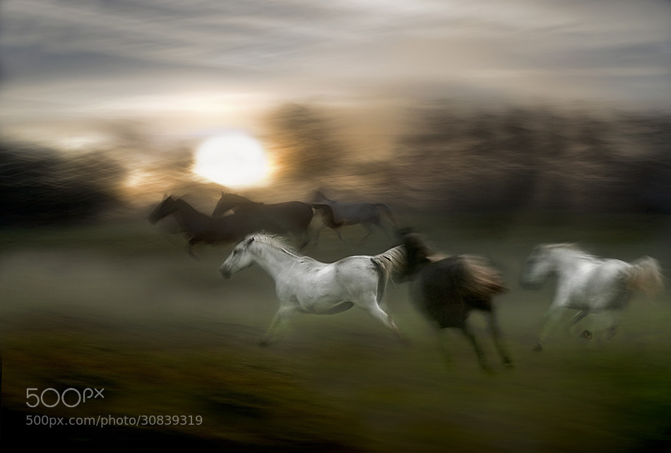 Photograph evening gallop by Milan Malovrh on 500px