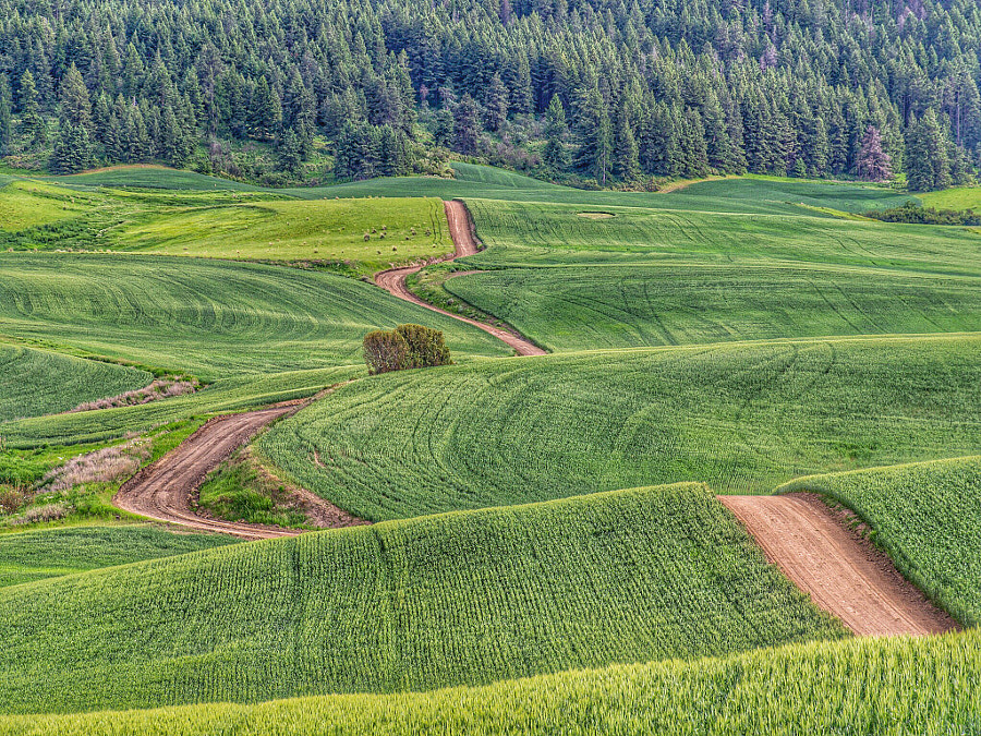 Winding road by Giancarlo Bisone on 500px.com