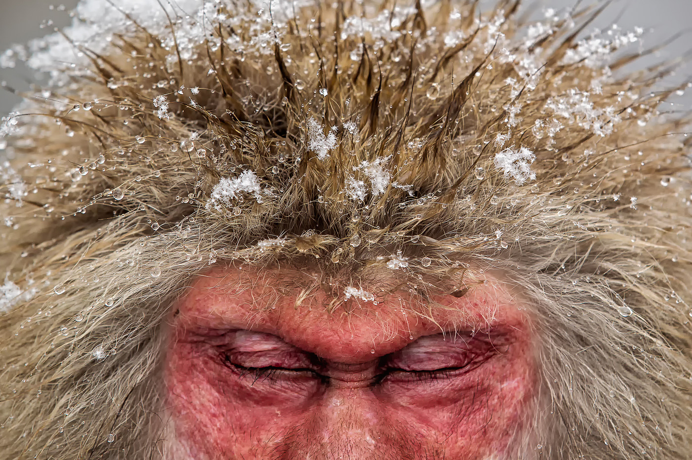 Photograph Snow Monkey by Phil  Morgan on 500px