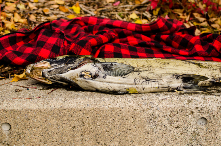 Photograph Dead Fish by Bobby Murbah on 500px