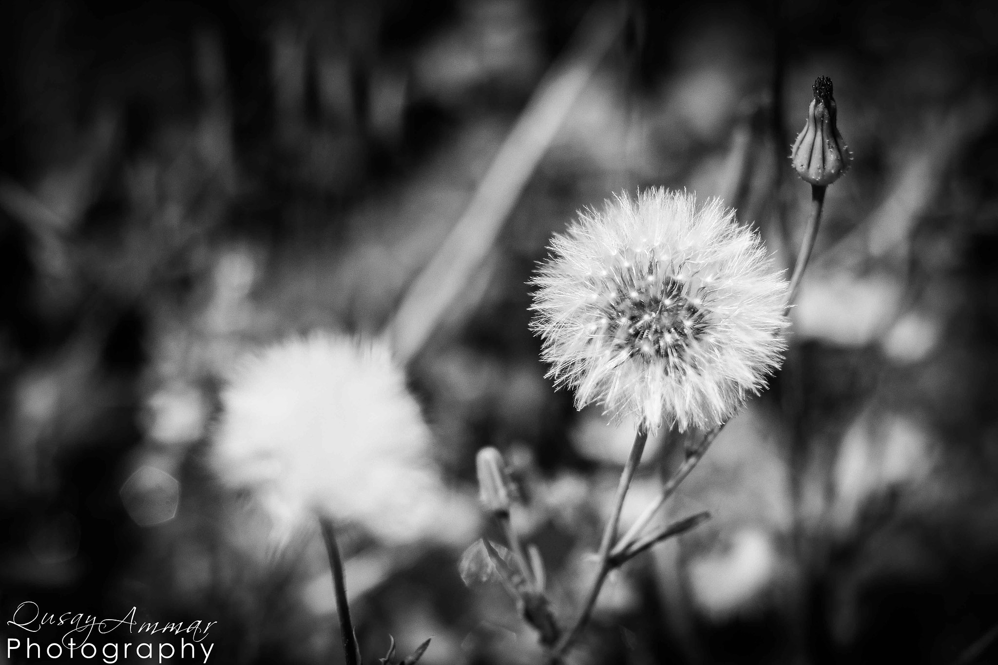 Photograph B & W Nature  by Qusay Abo Baker on 500px