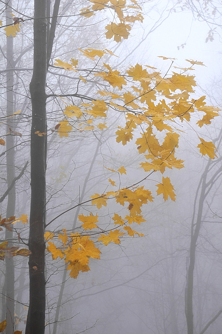 Photograph  Foggy Woods by Adrian  Per on 500px