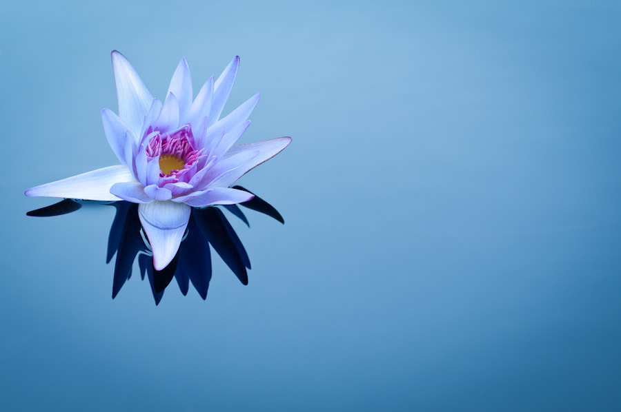 Photograph Water Lily by Barton Mitchell on 500px