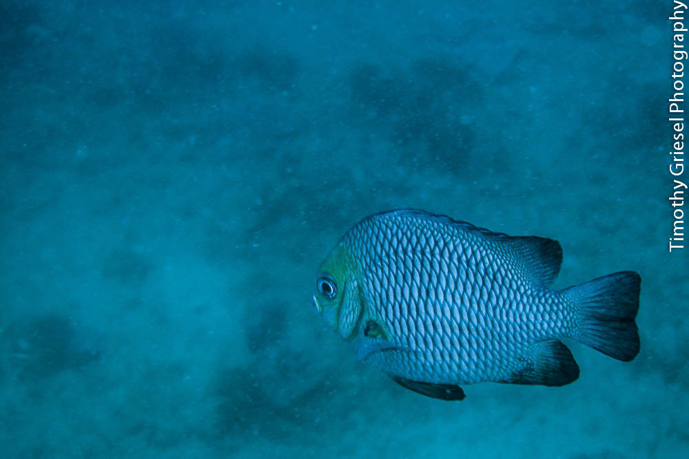 Photograph Little Fish by Timothy Griesel on 500px