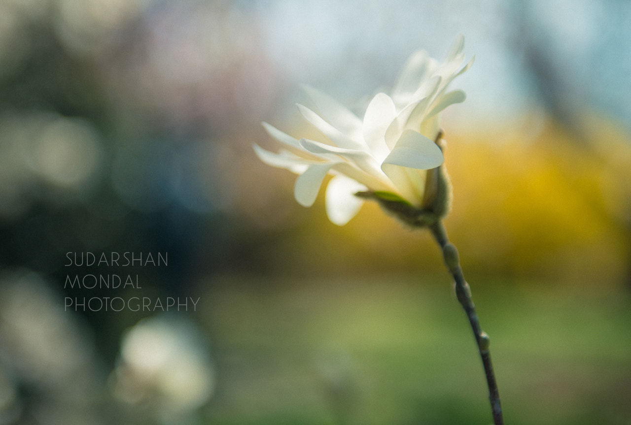 Photograph Color of Spring  by Sudarshan Mondal on 500px