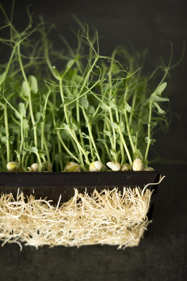 Peasprouts by Emma-Elisabeth Gouskova Poey on 500px.com
