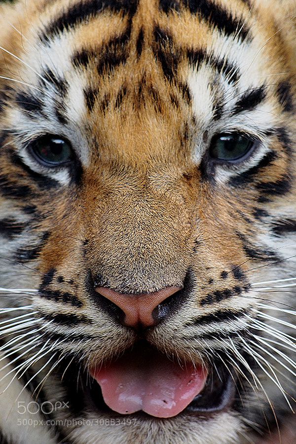 Photograph Baby Face  by Prabu dennaga on 500px