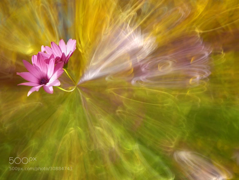 Photograph Central Sun Photosynthesis by Josep Sumalla on 500px