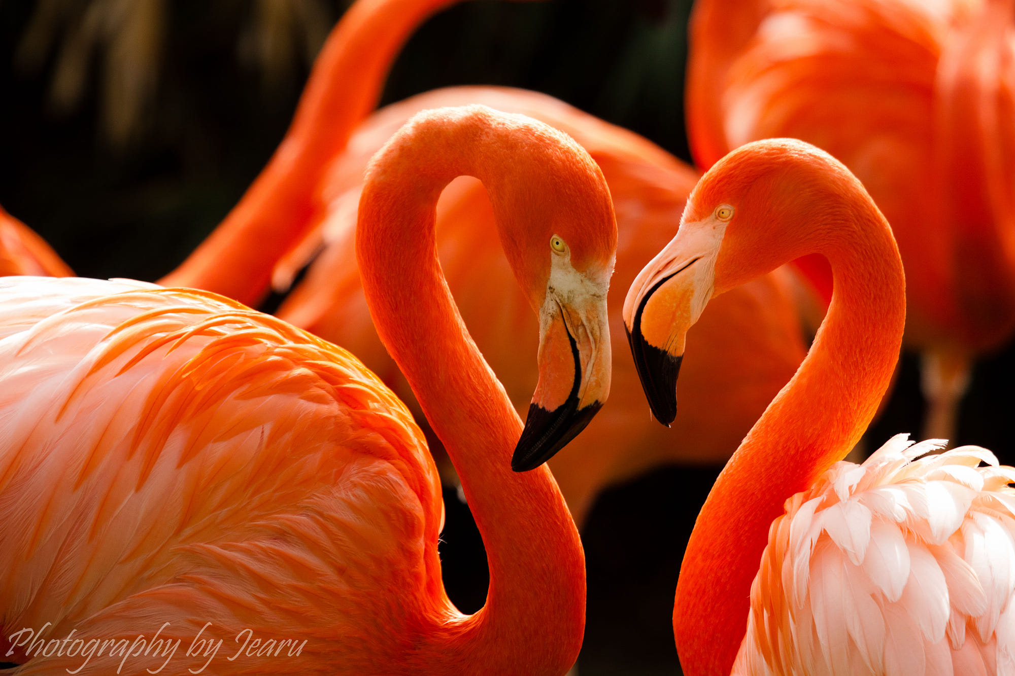 love of flamingos by jeannette rudloff photo 3088787 500px. Black Bedroom Furniture Sets. Home Design Ideas