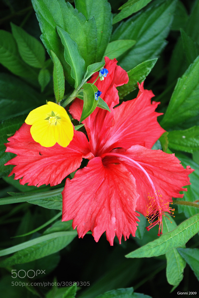 Photograph Flowers in Tahiti by Gionni Photos on 500px
