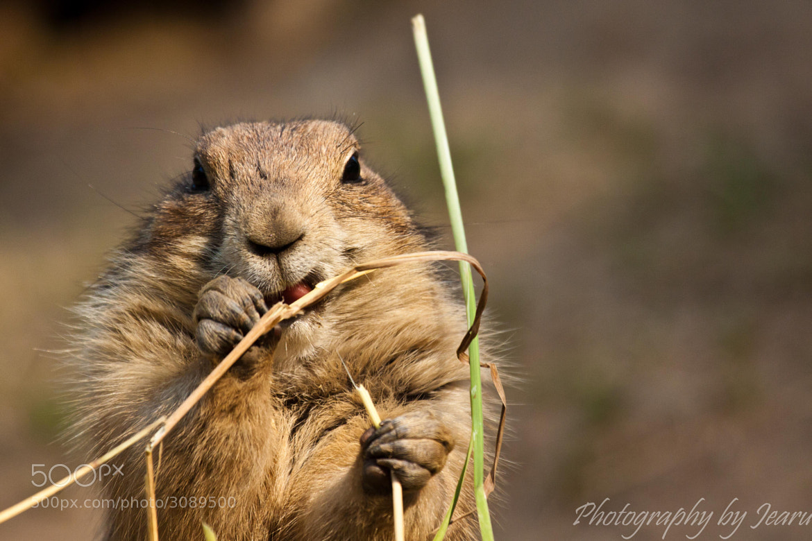 Photograph Hungry by Jeannette Rudloff on 500px
