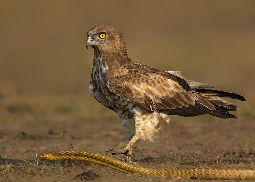Indian Birder's Click Wins Wildlife Photographer Of The Year Award
