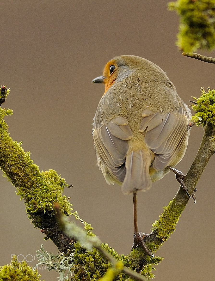 Photograph Robin by Jamie54 on 500px