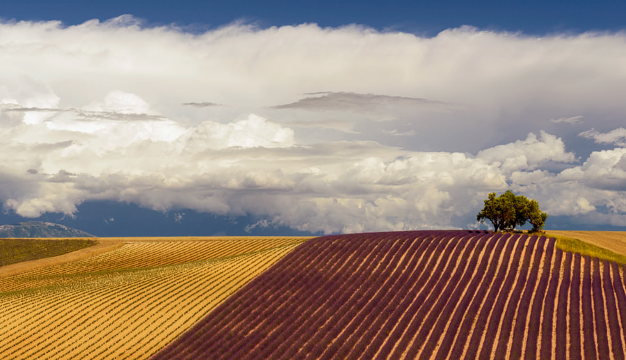 Line of Provence by Sergey Aleshchenko on 500px.com