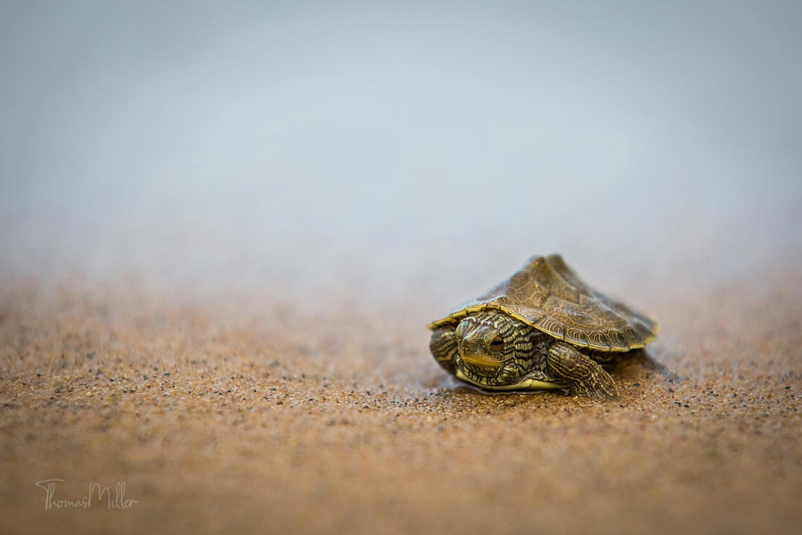 Making way by Thomas Miller on 500px.com