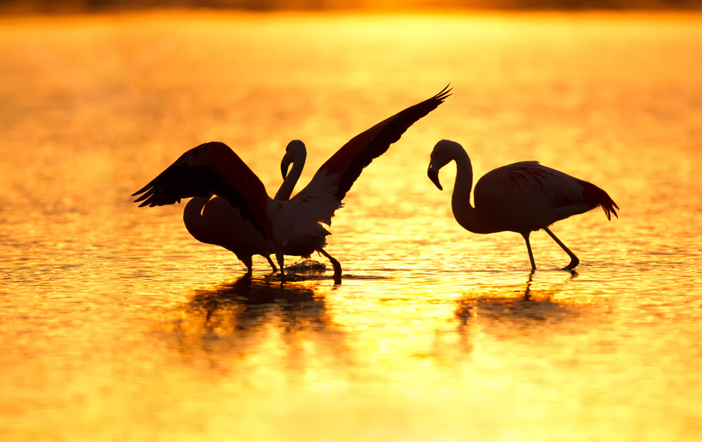 Photograph Flamingo's at Sunset by Andy Aubri on 500px
