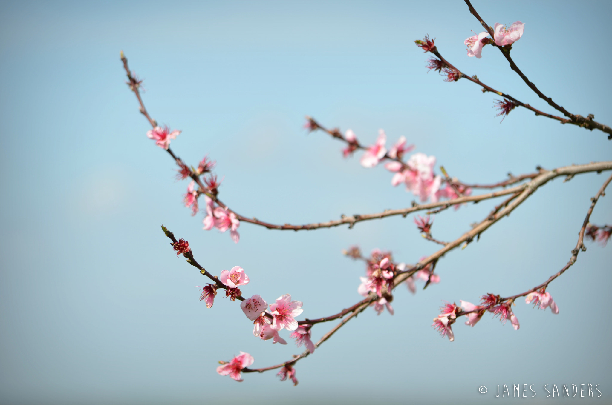 Photograph Cherry Tree by James Sanders on 500px