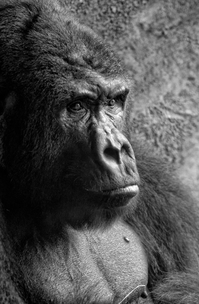 Photograph Contemplation by Rob Clements on 500px