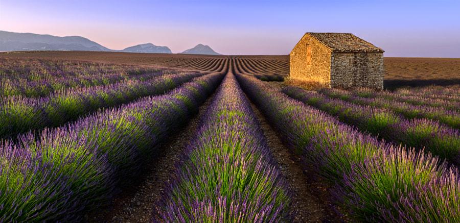 Morning in Provence by Sergey Aleshchenko