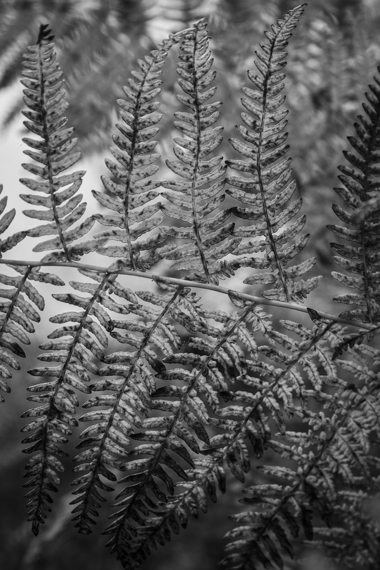 Photograph Fern by Jack  Pidduck on 500px