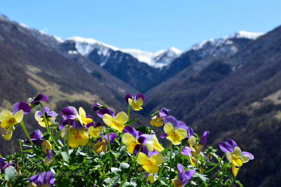 Photograph mountains and violets by giorgiasanelli on 500px