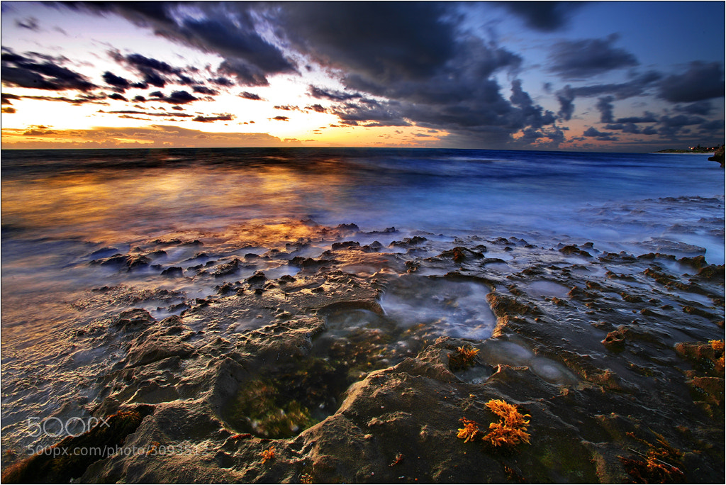Photograph Mindarie Yellow by Casper Smit on 500px
