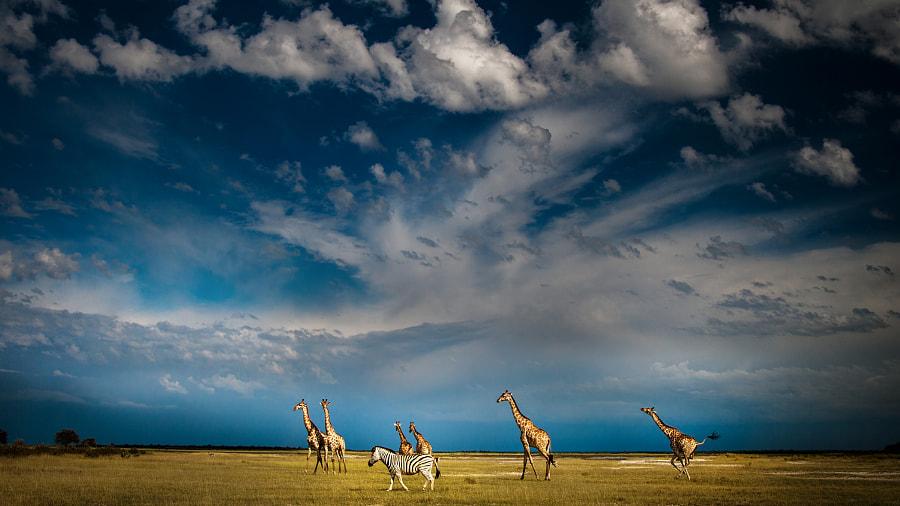 Under an African Sky by Irca & Jacky K.
