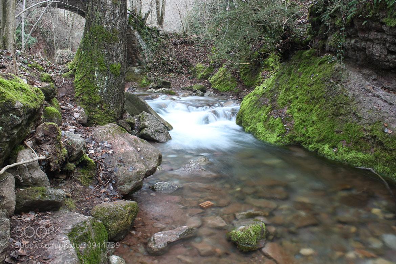 Photograph Magic forest by Jordi Freixas on 500px