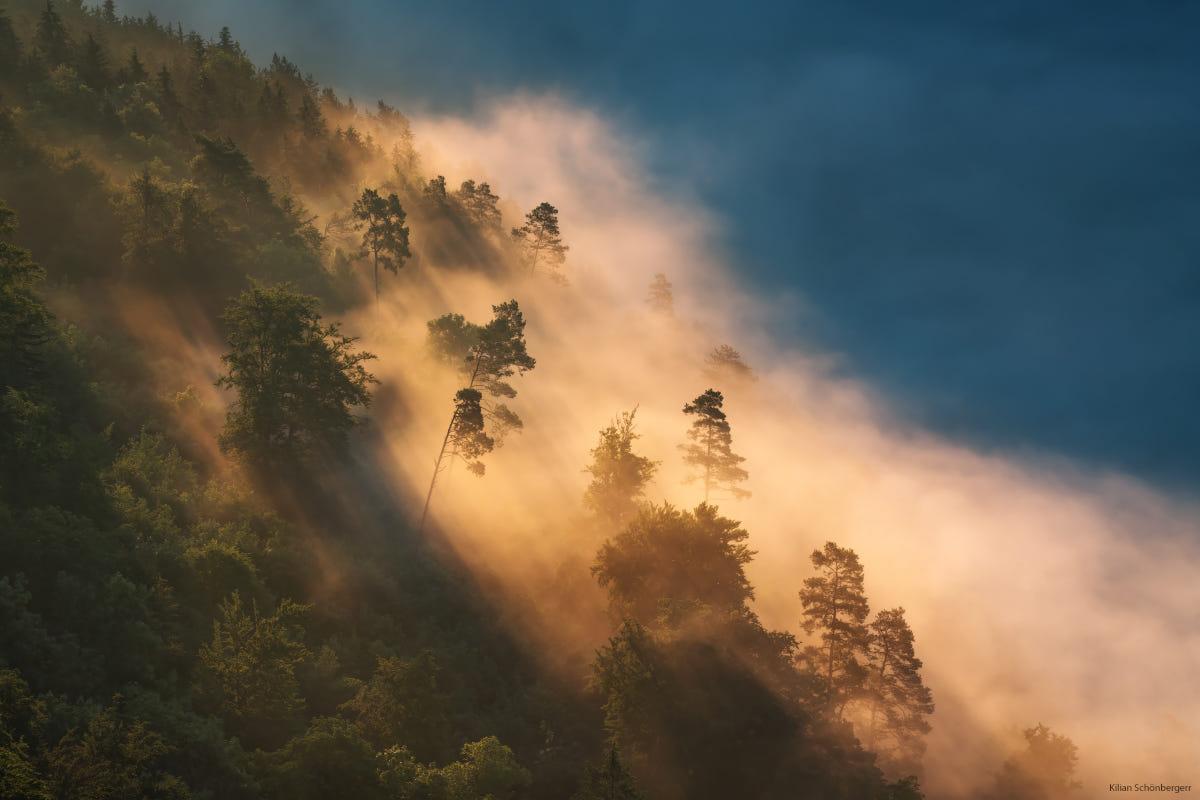 Shrouded by Fog