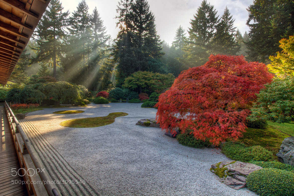 Photograph One Fall Afternoon in Portland Japanese Garden by David Gn on 500px
